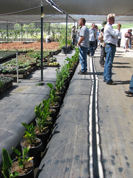 A drainage channel at Plants Plus Nursery filled with Canna and Sedum plants to intercept runoff.