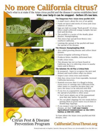 Citrus Flyer