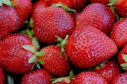 freshlypickedstrawberries