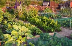 Vegetable garden page