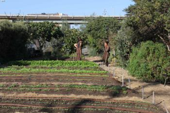 Urban Farming in Richmond. Photo by Aziz Baameur.