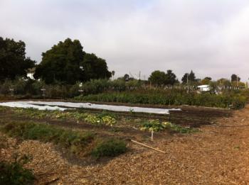 Ploughshares Nursery, Alameda, California