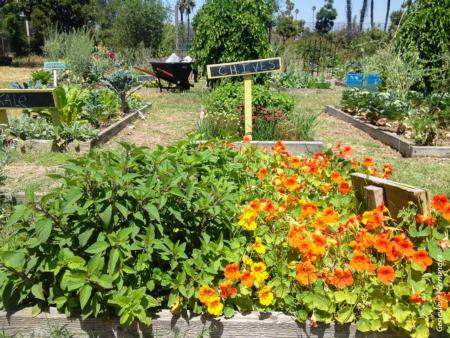Community Garden in Los Angeles County