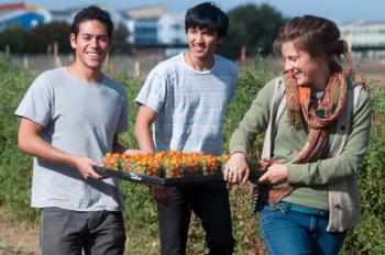 Students working at UC Davis Student Farm