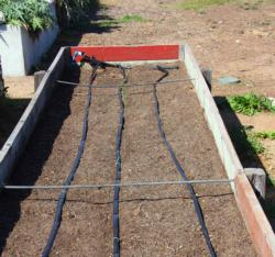 Raised bed and irrigation at Treasure Island Job Corps Farm, San Francisco.