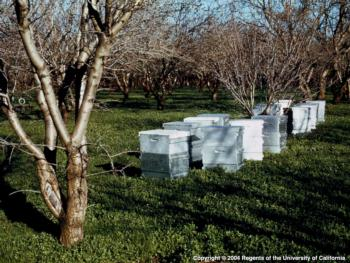 Honeybee Hives. Photo by E. Kilmartin, UC ANR