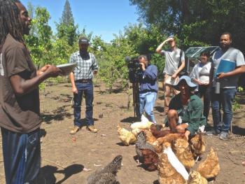 Yisrael Farm chickens