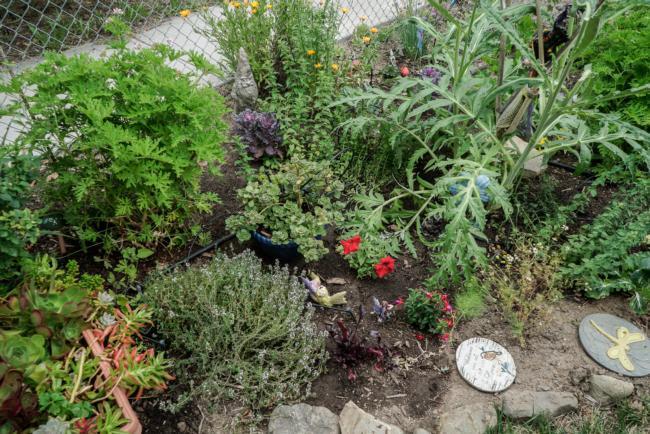 Closeup Of Edible Landscaping Garden