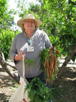 Master Gardener with carrots at the Arc Enrichment Center in Ojai, CA