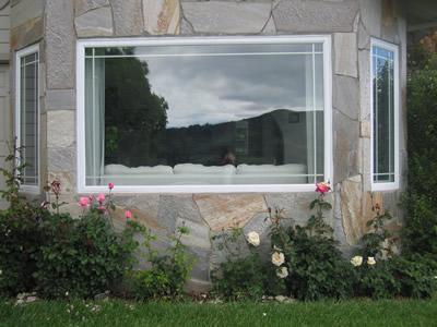 roses under window