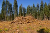 Biomass Utilization Information