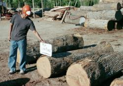 High quality Modesto ash logs