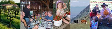 picture mix of agritourism activities
