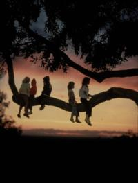 children in tree