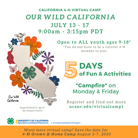 4-H Virtual Camp: Our Wild California July 13-17, 2020