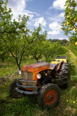 Tractor in the Orchard