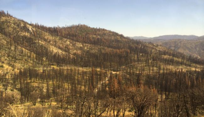 9/5 - Notes from a Recent Rim Fire Tour