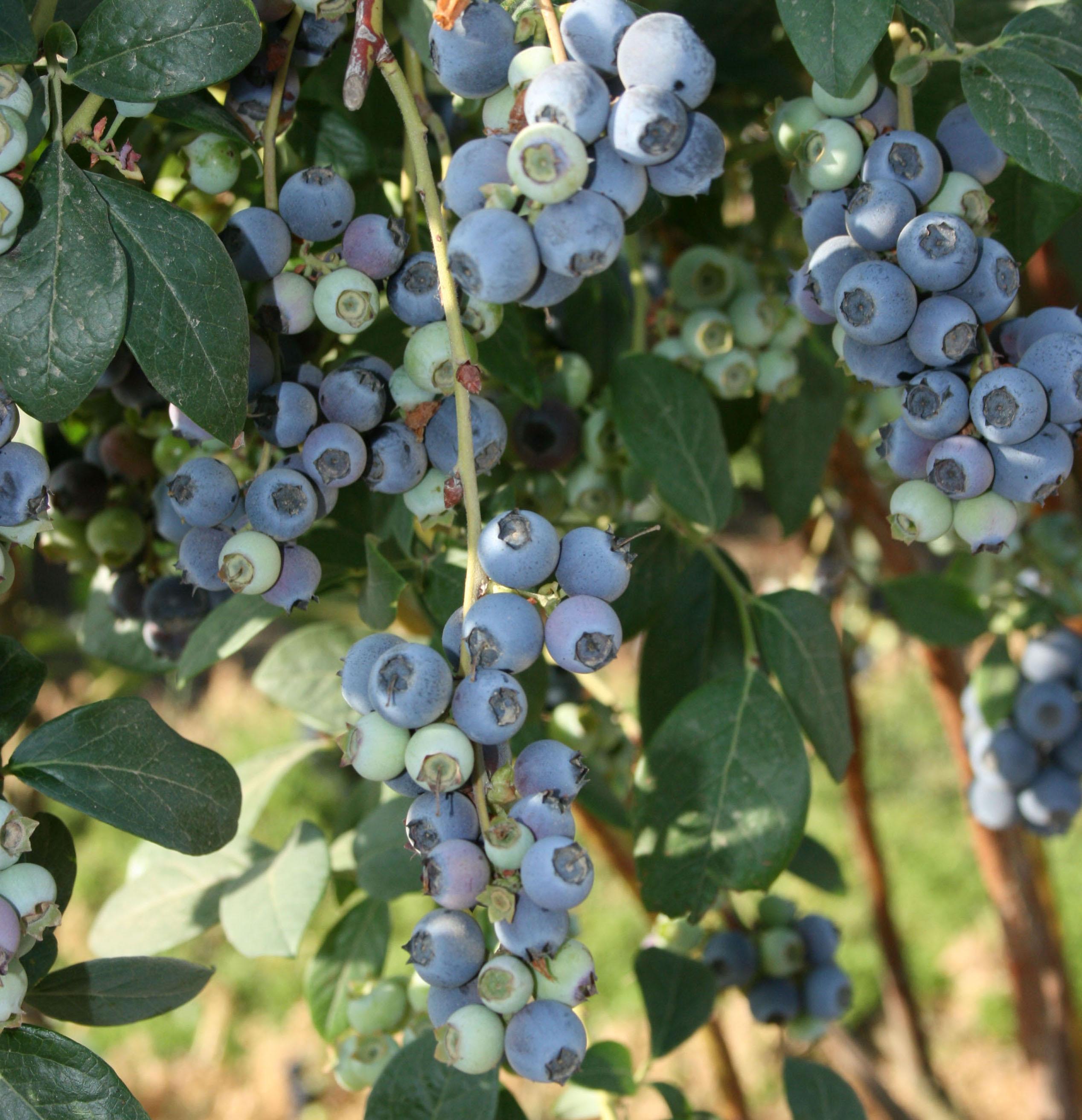 Christmas Tree Farm Southern California: New Prospective Farmers