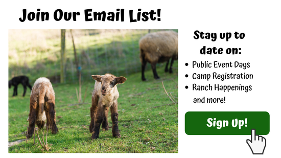 Join Our Email List! Lamb photo