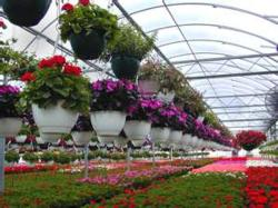 floraculture