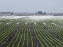Sprinkler irrigation systems that are properly designed, operated, and maintained can efficiently and uniformly apply water.