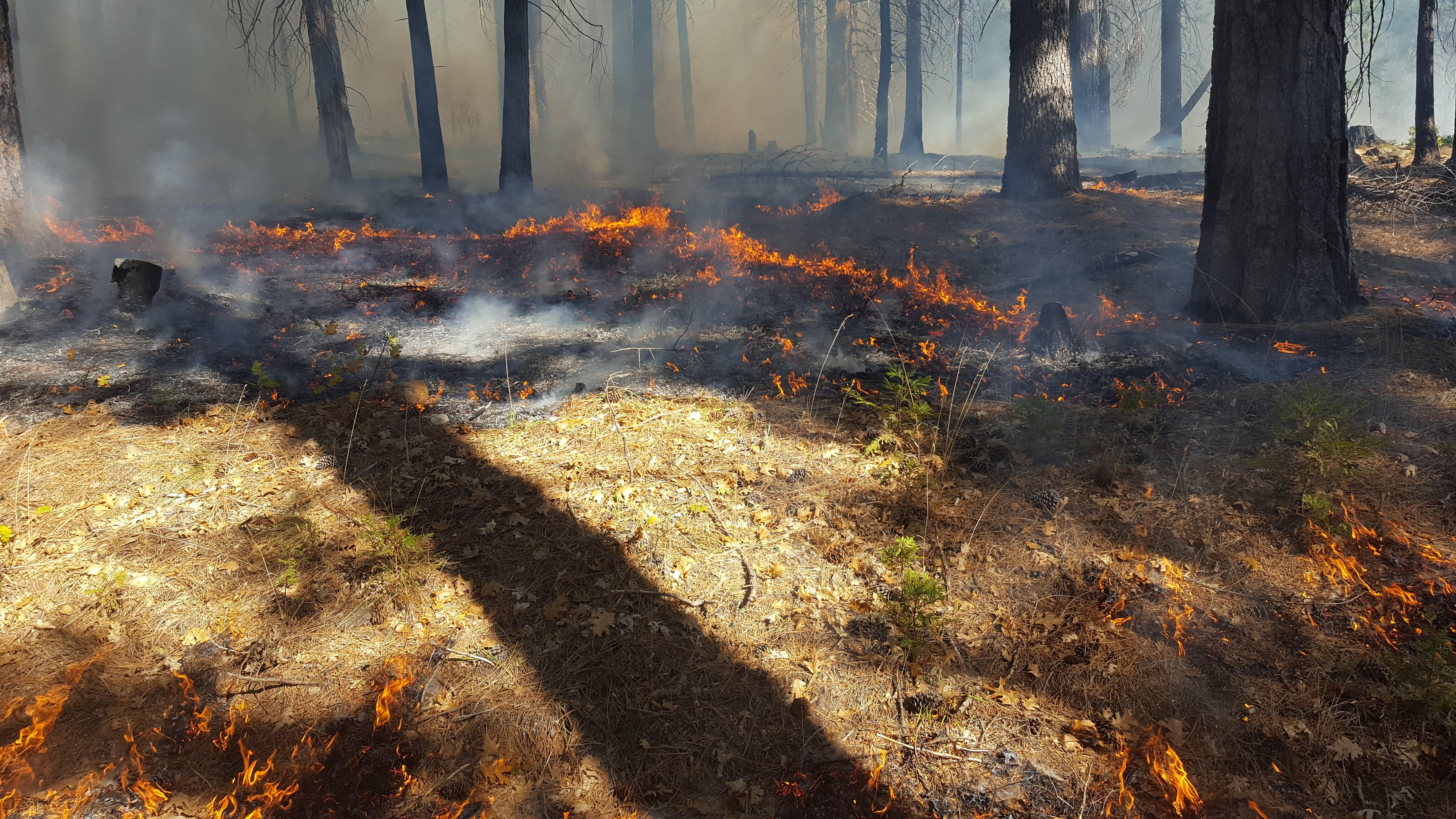 Learn How to Survive a Wildfire