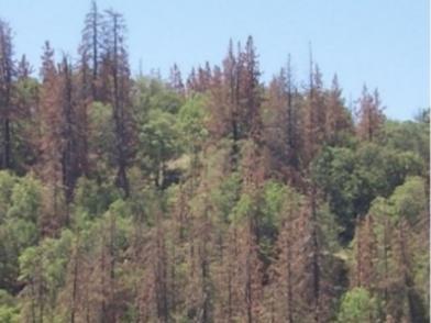 Hazard Trees