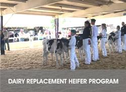 Dairy Replacement Heifer Program Website Page Link