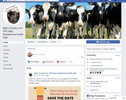 Dairy Replacement Heifer Project Facebook Page Image