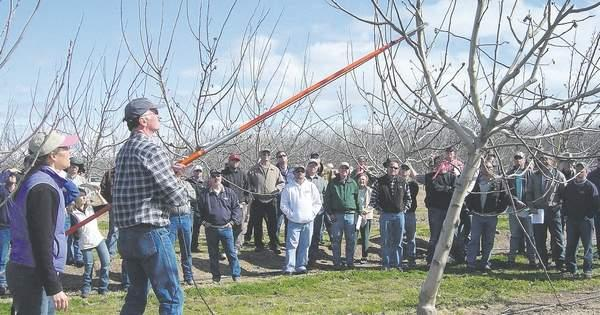 Bill Krueger - Pruning an Orchard