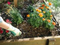 Preparing Your Garden for Spring with a Winter Clean Up