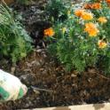 SVM 2-7-2105 Removing Weeds