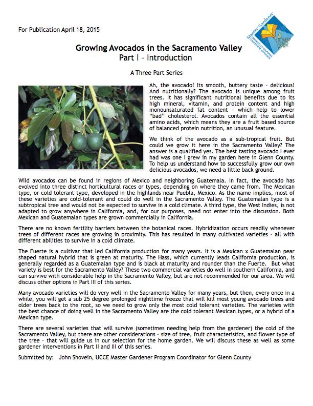 Growing Avocados   Part 1