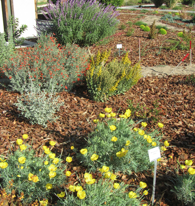 Landscaping cost estimate examples drought resistant for Landscaping rock estimator