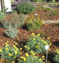 Drought Tolerant Landscaping - Part 1