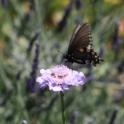 2015-09-19-Central Valley Gardening