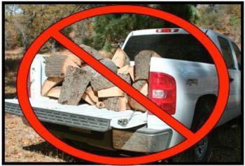Firewood_lg