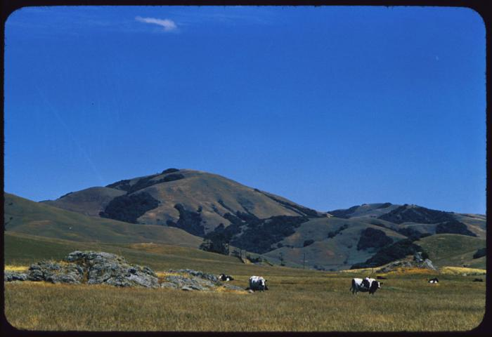 marin county-chileno valley rd-june 5th-1954