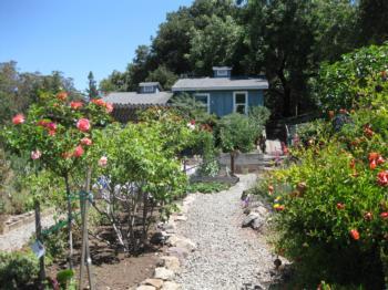 Napa MG Firewise garden
