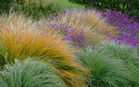 water-wise grasses