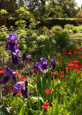 Spring Garden Tour Purchase Tickets Ucce Master