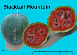 Blacktail Mountain watermelon