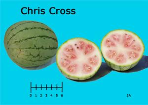 Chris Cross watermelon