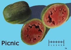 Picnic watermelon
