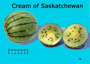 Cream of Saskatchewan watermelon
