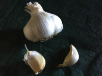 Garlic cloves, photo by Laura Monczynski