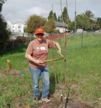 Planting Bareroot
