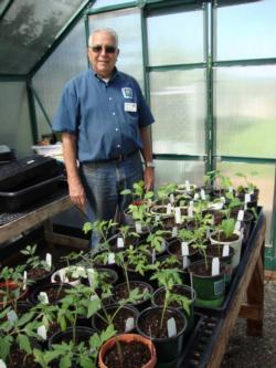 Frank with tomato transplants