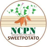 ncpnSweetPotato_logo2