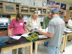 Volunteers at a table inspecting plant specimens for diseases